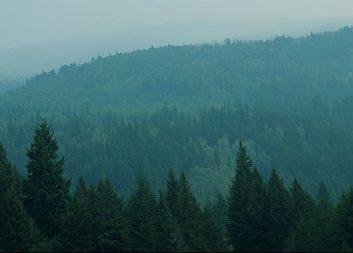 Treesearch och WWSC startar virtuell konferensserie