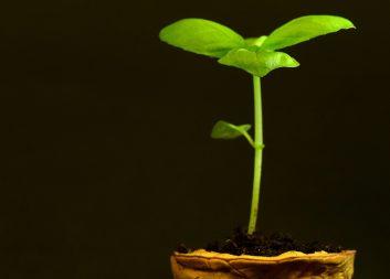 ViridiFibra tar odlingsduk till marknaden