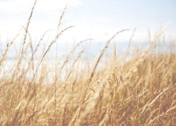 Utlysning öppen för utveckling av biobaserade produkter