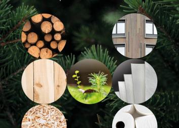 Ny handbok beskriver hållbarhetsaspekterna för skogsråvara från svenskt skogsbruk