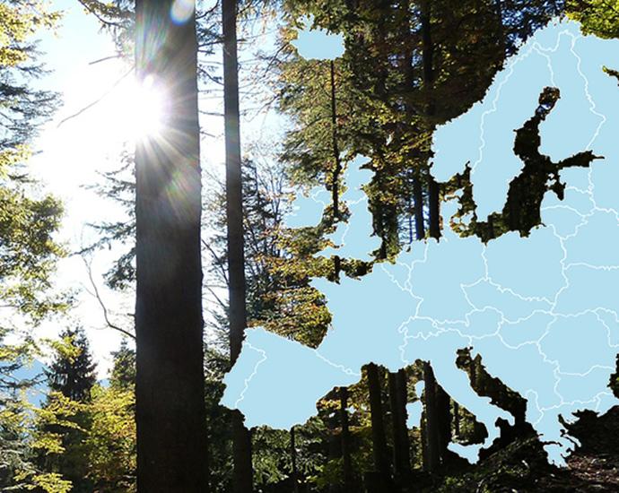 Skog och karta över Europa